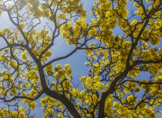 La libido aumenta en primavera, aseguran especialistas