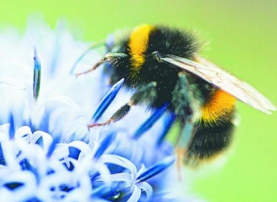 En Oslo crean autopista para las abejas